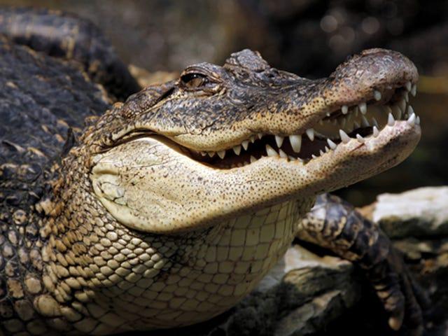 Escaped Crocodile Blamed For Deadly Plane Crash