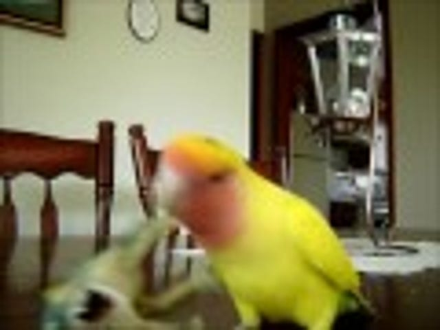 Watch This Axe-Wielding Bird Lay Waste to Everything You Love