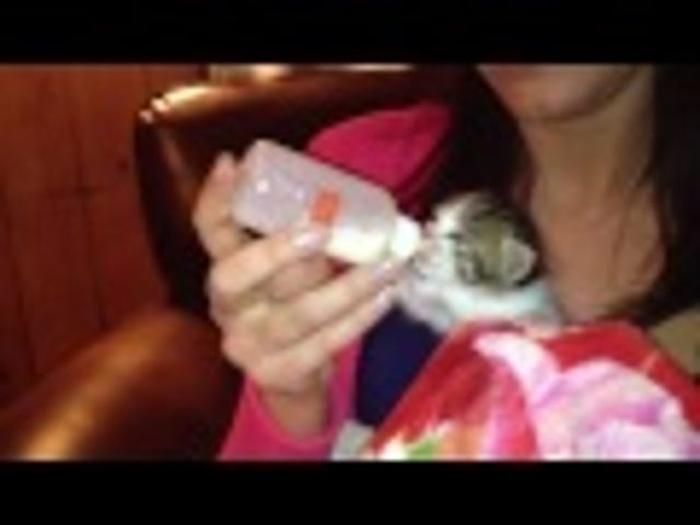 Tiny Kitten Develops the Cutest Case of Hiccups Ever