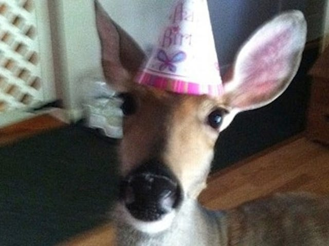 Lilly the Deer Allowed To Continue Living With Humans Who Saved Her