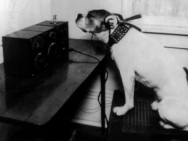 Things don't get much better than dogs listening to headphones
