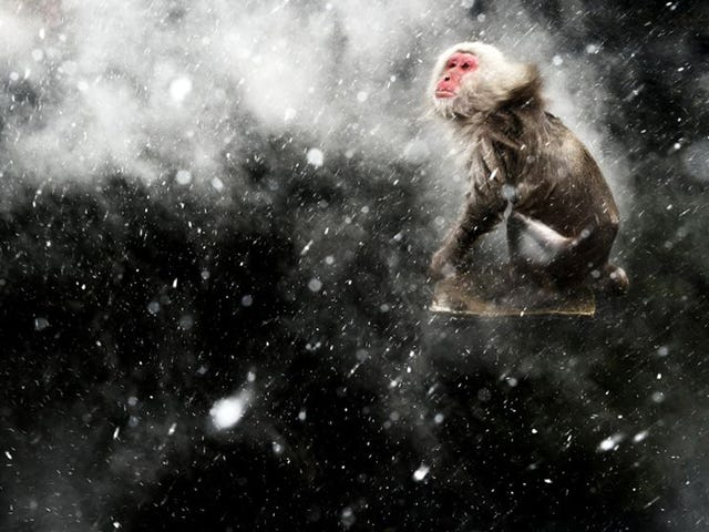 The best Wildlife Photographer of 2013