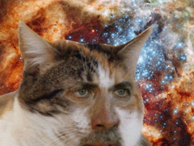 Nick Cat