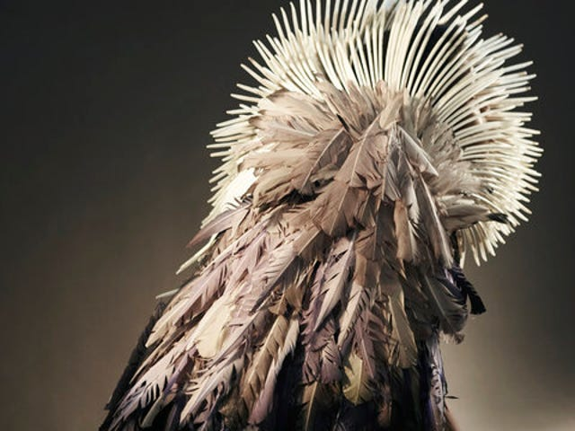 Feathered costumes change colors in different climates