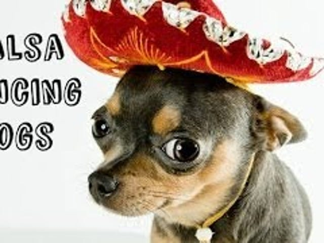 All These Dogs Can Salsa Dance Better Than You