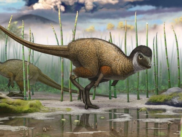 Dinosaur discovery suggests feathers widespread amongst dinosaurs