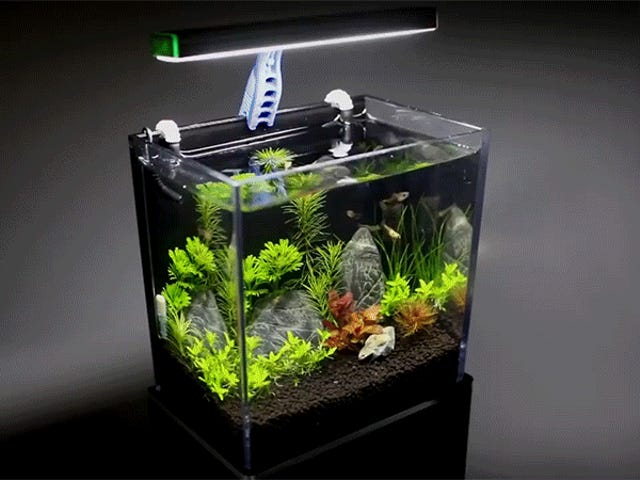 Recycling a GoPro Box Into a Working Aquarium Is the Best Reason to Upgrade<em></em>