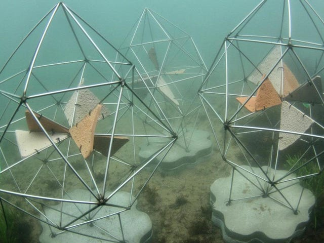 The Sydney Opera House's New Artificial Reefs Look Like Works of Art