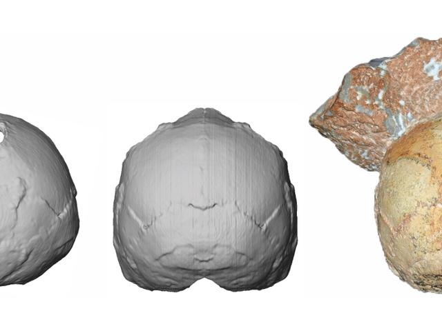 Фрагмент стародавнього черепа штовхає назад дата найдавніших людей в Європі
