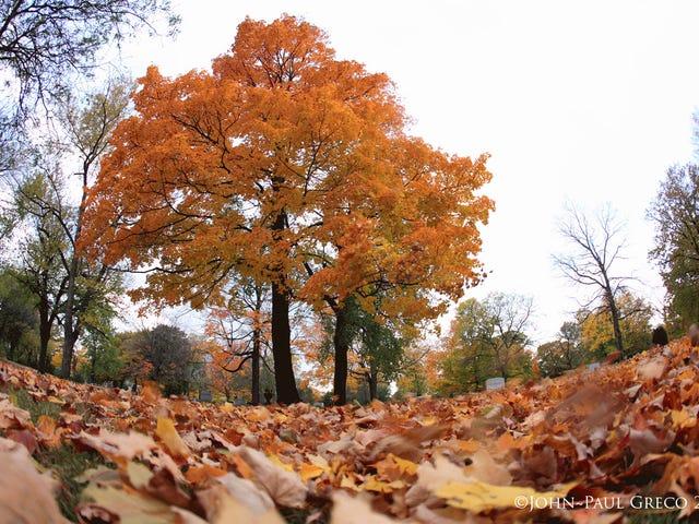 La loca mezcla de otoño te emocionará como el arce en tu pene - AMA