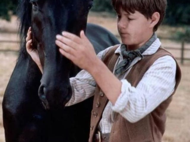 Green Plaque salute for Black Beauty Billy