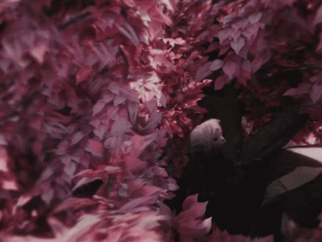 Последний трейлер серии Dark Crystal для Netflix - идеальное сочетание Marvel и Джима Хенсона.