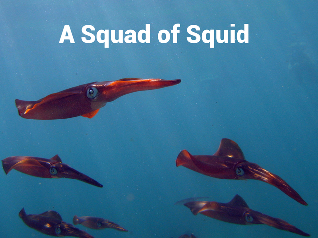A bunch of squid should be a 'Squad'.  Time for change.
