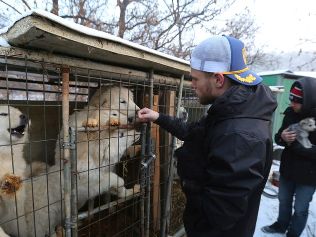 Gus Kenworthy Rescued a Puppy at the Olympics Again, This Time From a Dog Meat Farm