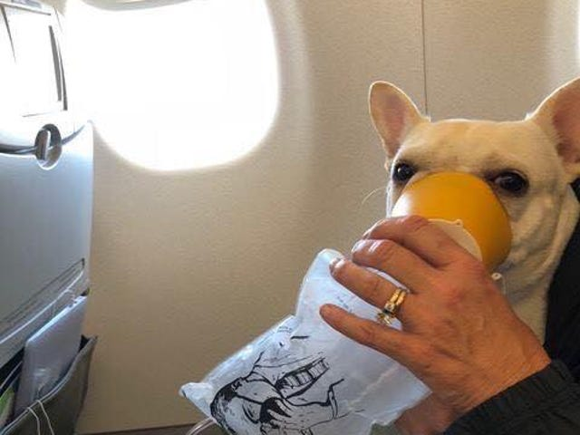An Airline Actually Saved a Dog's Life for Once