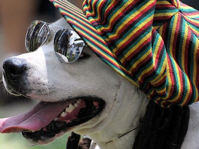 "<a href=""https://news.avclub.com/dogs-are-chill-as-fuck-love-reggae-and-soft-rock-1798256843"" data-id="""" onClick=""window.ga('send', 'event', 'Permalink page click', 'Permalink page click - post header', 'standard');"">Dogs are chill as fuck, love reggae and soft rock</a>"