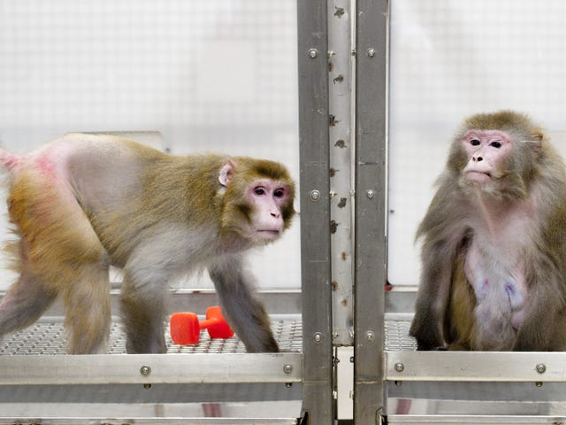 How Living Near the Starvation Point Can Extend Lifespan