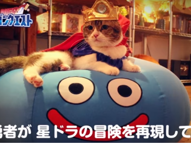 Cats On A Dragon Quest Adventure Is Everything