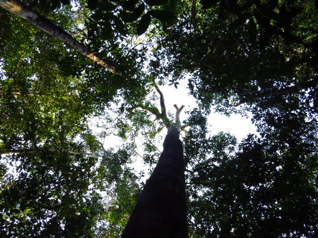 The Amazon Rainforest Is Adapting to Climate Change, But Not Fast Enough