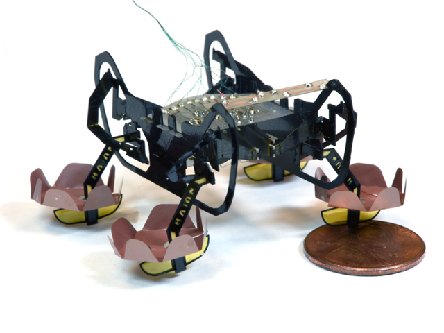 Insectoid Microbot Leverages Small-Scale Physics to Swim and Walk Underwater