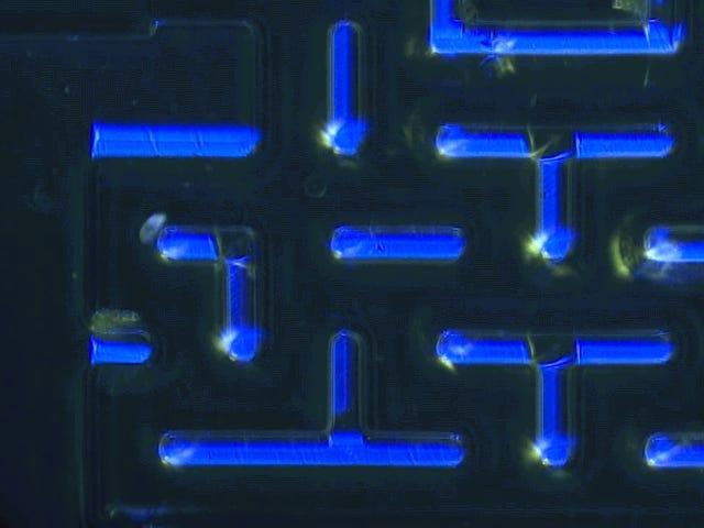 Mira cómo un grupo de microorganismos juega al Pac-Man para sobrevivir