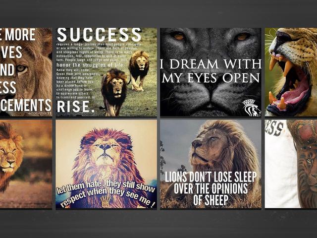 Dlaczego sportowcy kochają lwy tak bardzo?