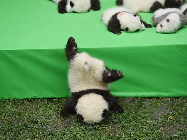 Saturday Night Social: Hosted By One Baby Panda Too Many