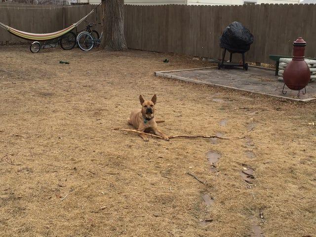 """내 개가 말하기를 """"감히이 스틱을 가져 가자."""""""