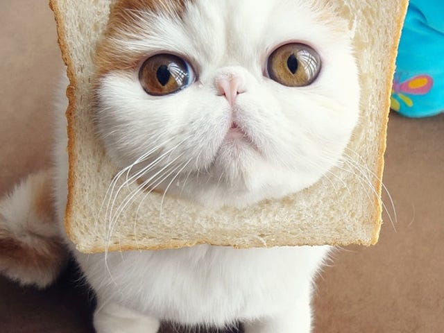 """It Would Be Distasteful to Call this Kitty, """"Inbread"""""""