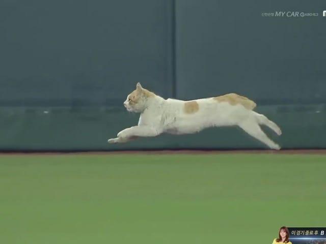 Cat On The Field Interrupts Korean Baseball Game