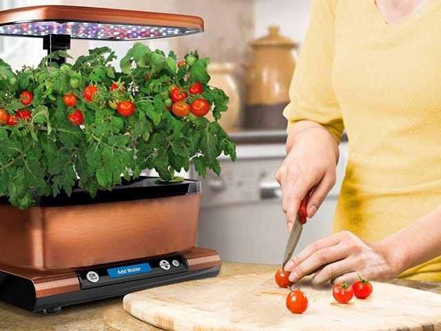 Grow Your Own Veggies and Herbs on Your Countertop With This Discounted AeroGarden