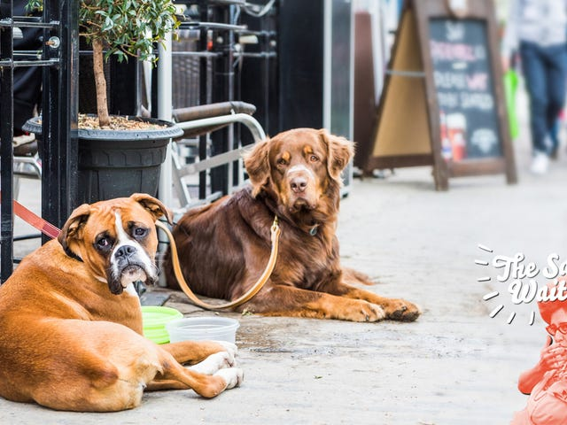 Ask The Salty Waitress: Why can't my dog sit <i>just outside</i> the restaurant patio?<em></em>