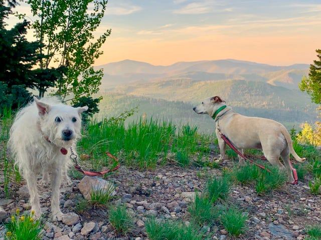 High Altitude Doggo Content