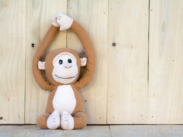 Florida Woman Walks Into Work to Find Monkey With a Noose Around Its Neck, Racist Notes in Her Office: Report