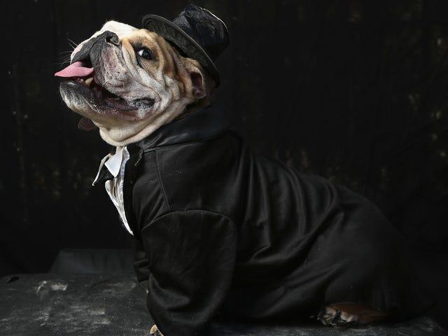Les choses peuvent être terribles, mais ce mariage de chien semble assez doux