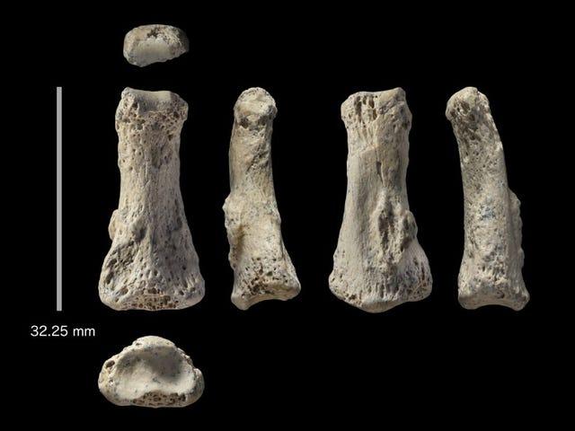 Jari Tengah 88,000 Tahun Lama yang Ditemui di Arab Saudi Boleh Menyusun semula Sejarah Manusia