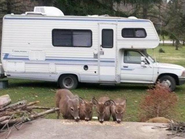Mini campeurs