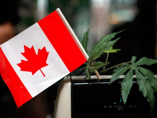 Voti del Senato canadese per legalizzare l'erba ricreativa