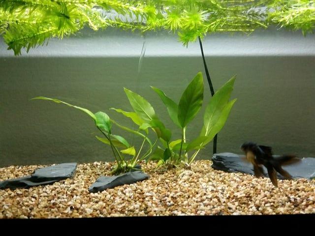 more fishlopposite