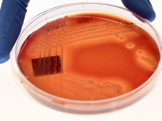 科学家认为,现在是时候退出大型药物的抗生素研究了