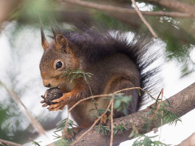 Six Baby Squirrels Got Stuck Together by Their Tails, Demonstrating How Things Could Be Worse for You