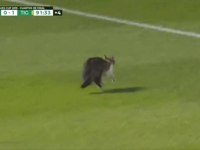 Idiot On The Pitch είναι σχεδόν τραυματίες, αποφεύγει unccathed, έχει whiskers, είναι μια γάτα
