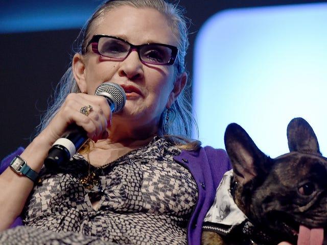 Le chien de Carrie Fisher est émotif en la voyant à l'écran pendant le dernier Jedi