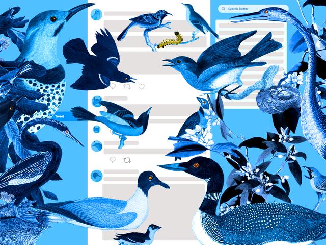 Bird Twitter Is My Oasis in Internet Hell
