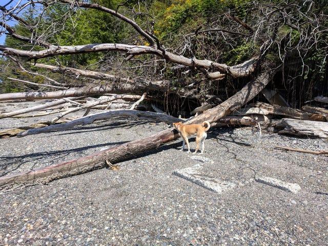 Doggo playa