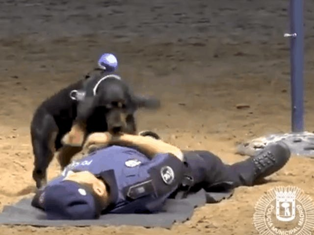 Poncho the Spanish Police Dog Goes Viral For Showing Off His CPR Skills