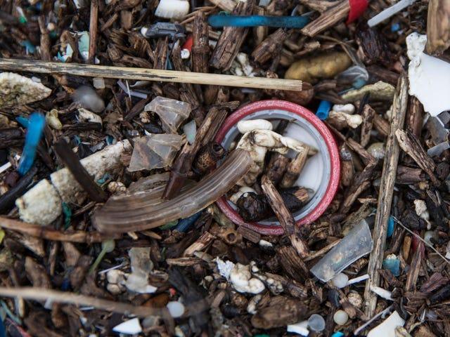 Wetenschappers zeggen dat ze Microplastics hebben gevonden in People's Poop, maar maken zich nu nog geen zorgen