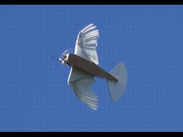 Scientists Built a Robot From 40 Pigeon Feathers and It Flies Beautifully