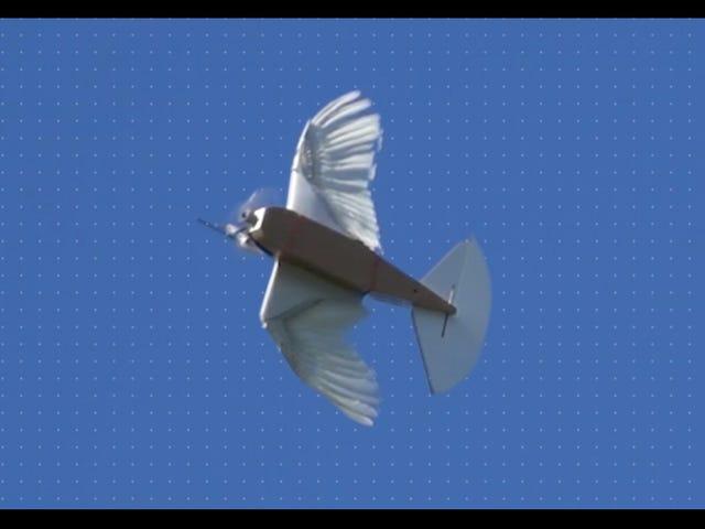 Videnskabsmænd opførte en robot fra 40 duerfjer og det flyver smukt