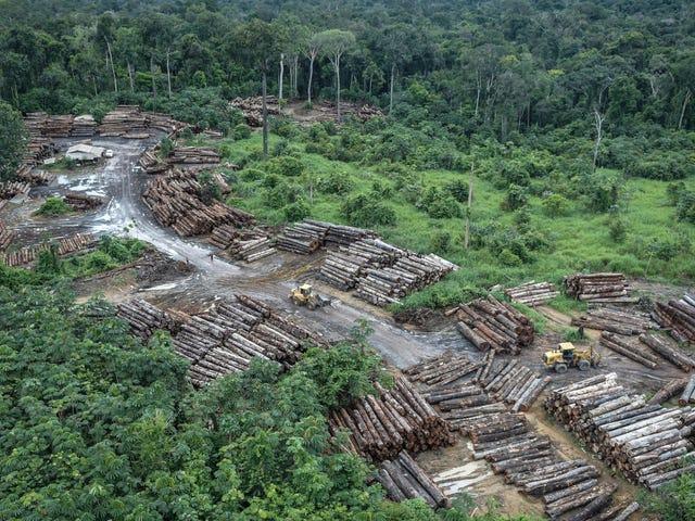 En la primera quincena de julio, el Amazonas perdió casi 400 millas cuadradas de bosque
